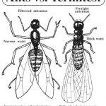 ants v termites