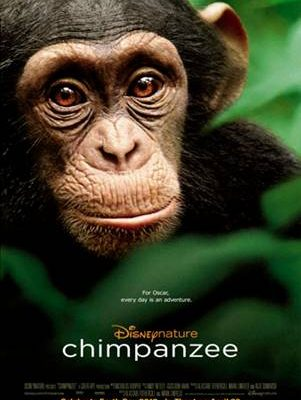 Disneynature's Chimpanzee, Helping Chimps, Global Resort Homes and an Adventure for ME#DisneyGlobalEvent