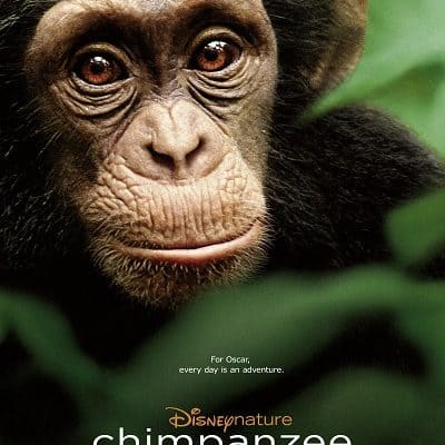 Disneynature's Chimpanzee: A family film that will touch your heart in theaters April 20 #MeetOscar #DisneyGlobalEvent