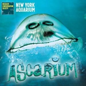 ascarium