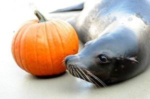 seals at ascarium