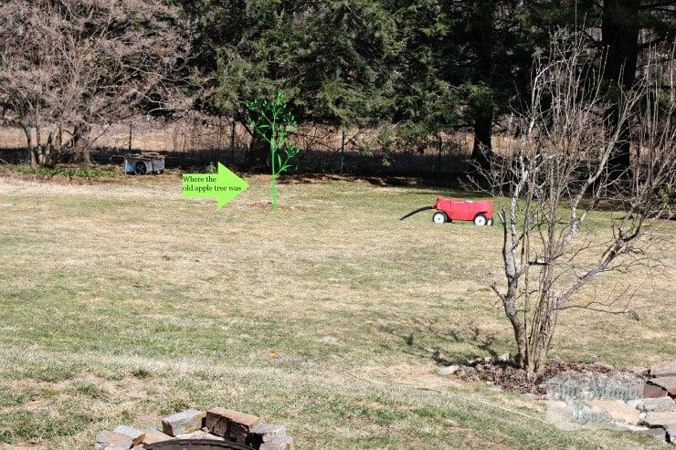yard spring 2013