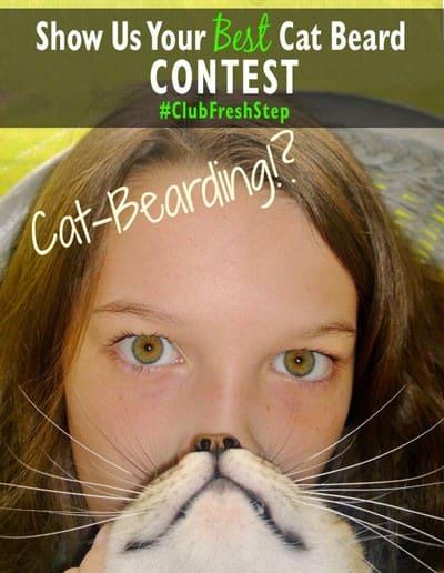 Cat-Bearding-Contest