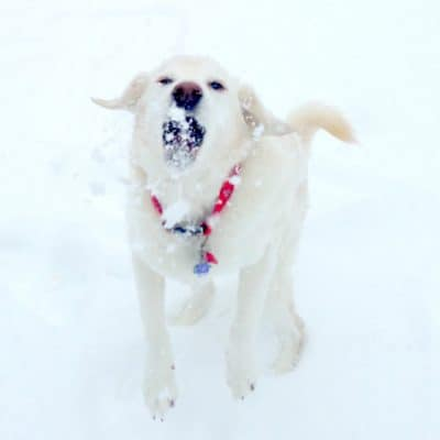 Catching snowballs with Tobey #RecipeForMoments