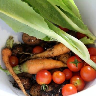 Why I grow my own food