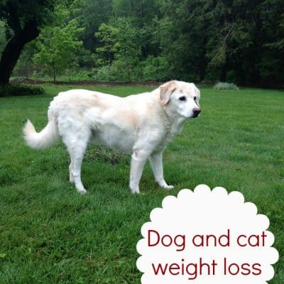 Dog and cat weight loss  #PerfectWeight