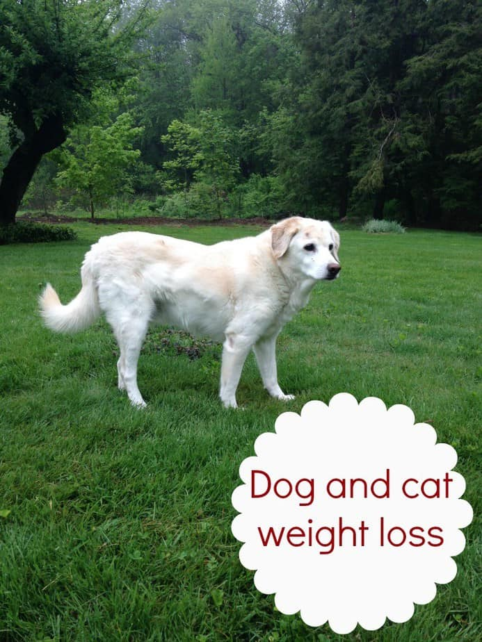 dog-weight-loss-#PerfectWeight