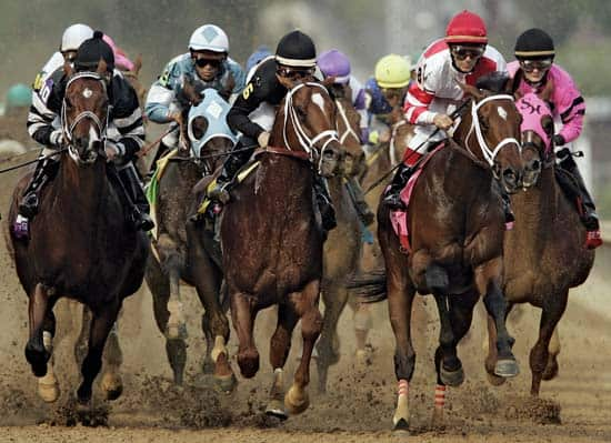 kentucky-derby-horses