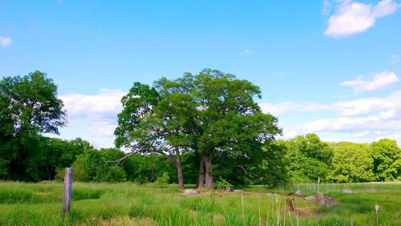 samsung-heritage-farm