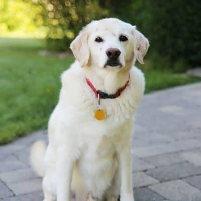 Healthy Dog Foods for Happy Pets