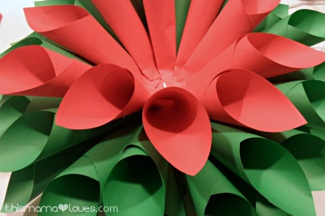 how to make a poinsettia turn red