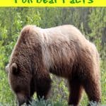 Fun Bear Facts