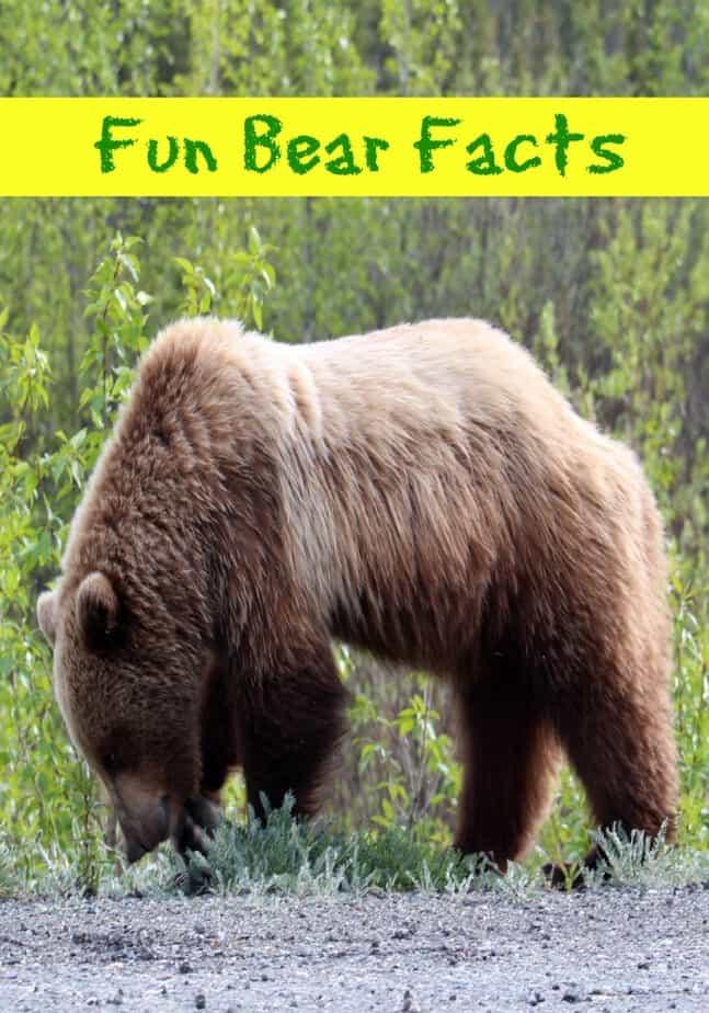 Fun Bear Facts