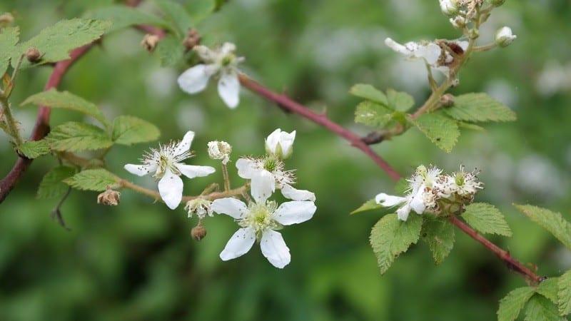 pretty floweres make allergies