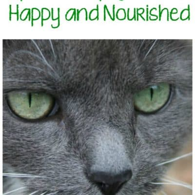 4 Tips to Keep Your Pet Happy and Nourished