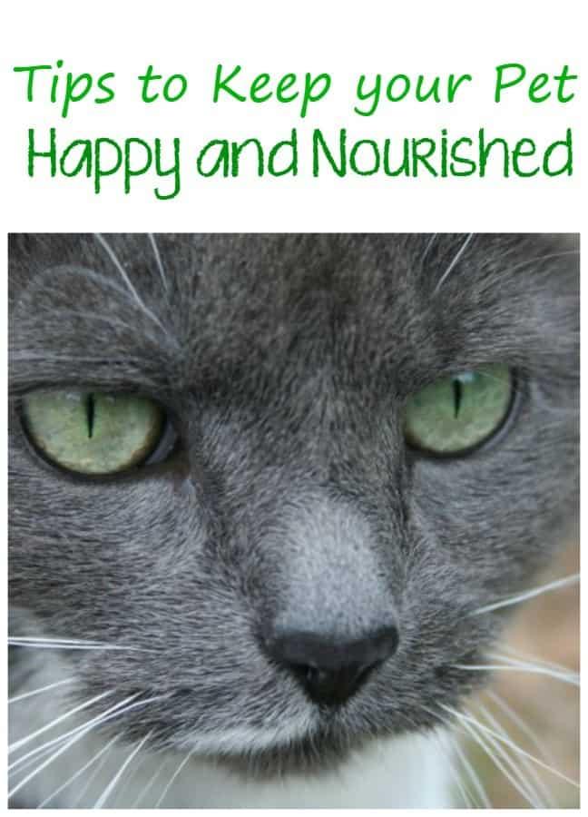 keep-pet-happy-nourished