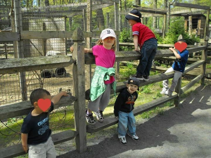 messy zoo pic