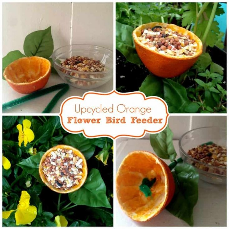 upcycle bird feeder