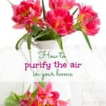 how-to-purify-air-in-your-home