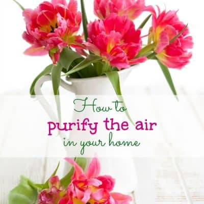How to purify the air in your home