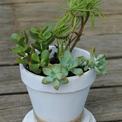 Shabby Chic Succulent Planter
