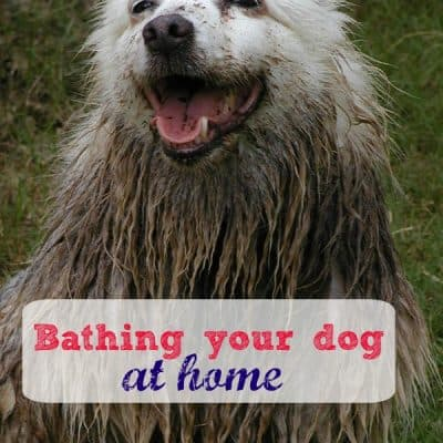 Down and Dirty Tips to Bathe Your Dog at Home