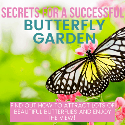 7 Secrets for Successful Butterfly Gardens