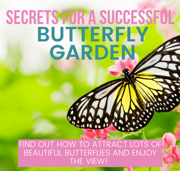 secrets for a successful butterfly garden from this mama loves