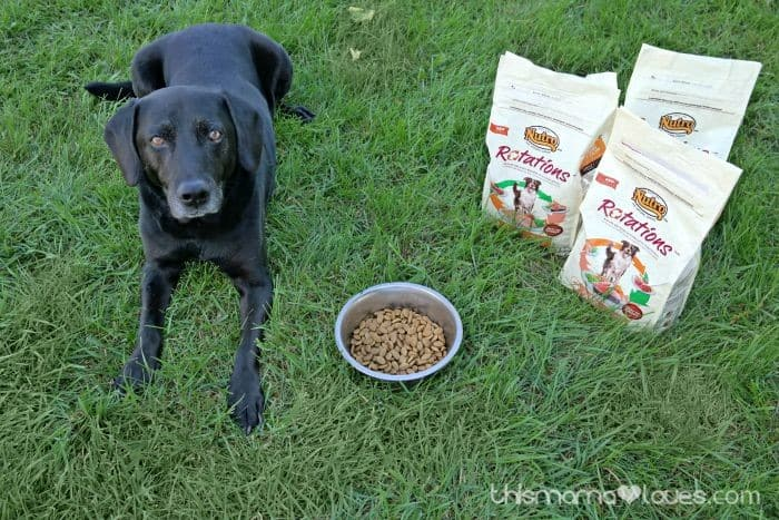 Feeding Your Dog a Variety without Dangerous Human Foods
