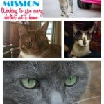 million-meow-mission-cats-label