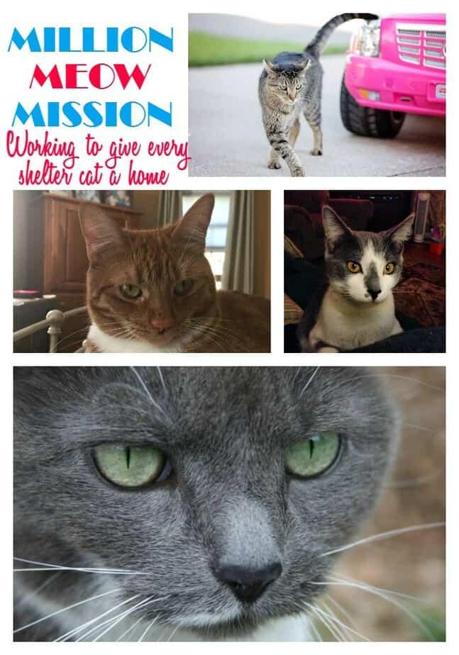 million-meow-mission-cats-label