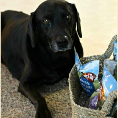 Safely Spoiling Pets at the Holidays