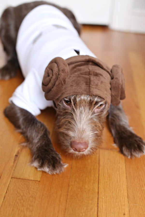 leia hoodie for dogs