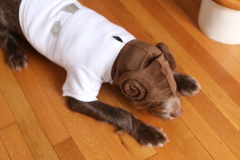 Princess Leia hoodie- hiding