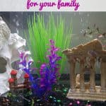 choosing-the-right-fish-tank-hero