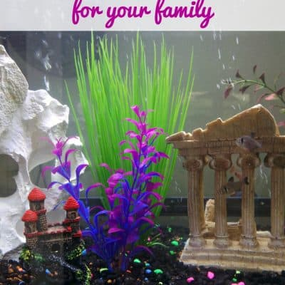 Choosing the right fish tank for your family
