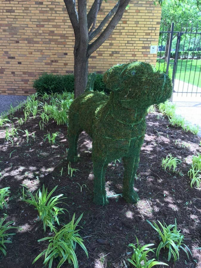 purina campus dog bush