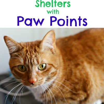 Support Local Shelters with Paw Points