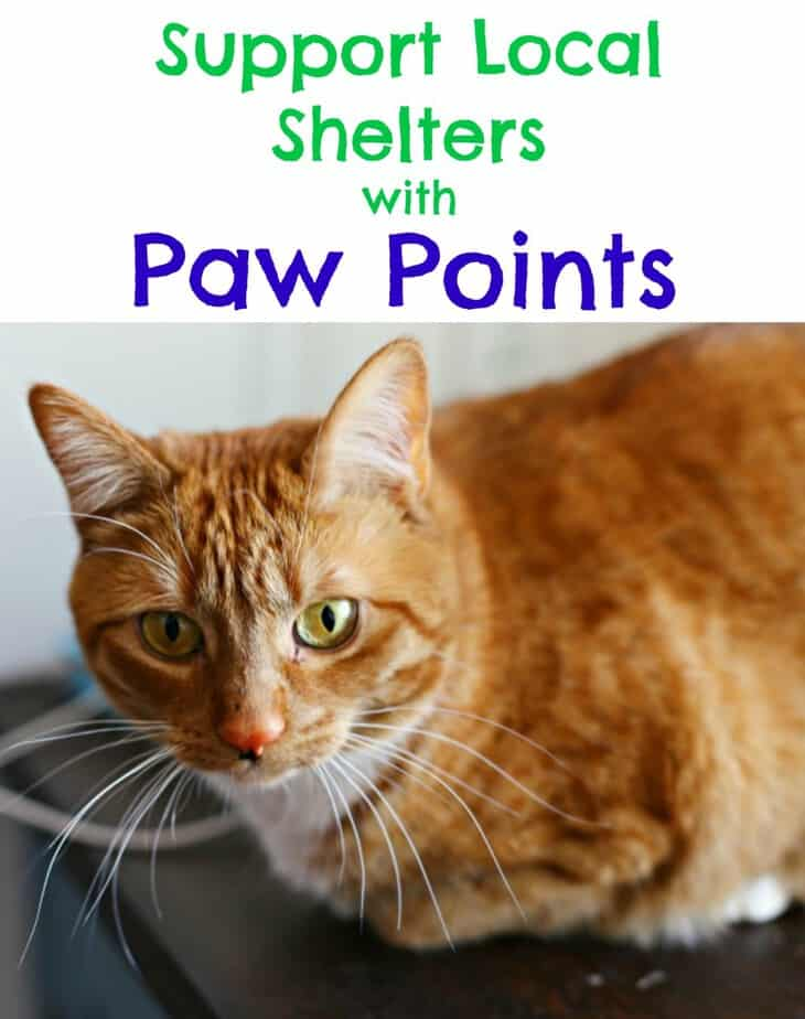 Support Local Shelters with Paw Points - This Mama Loves