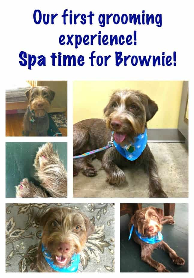 Petcogrooming Brownie S First Grooming Experience This Mama Loves