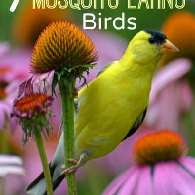 7 Ways to Attract Mosquito Eating Birds