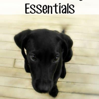 Puppy Training Essentials