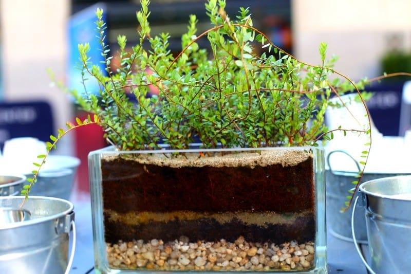 miniature-cranberry-bog