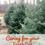 Caring for your Fresh Cut Christmas Tree Keeping It Real from This Mama Loves
