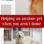 Helping an anxious pet when you aren't home with interactive pet camera