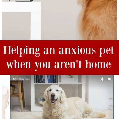 Helping an anxious pet when you aren't home with Petcube interactive pet camera