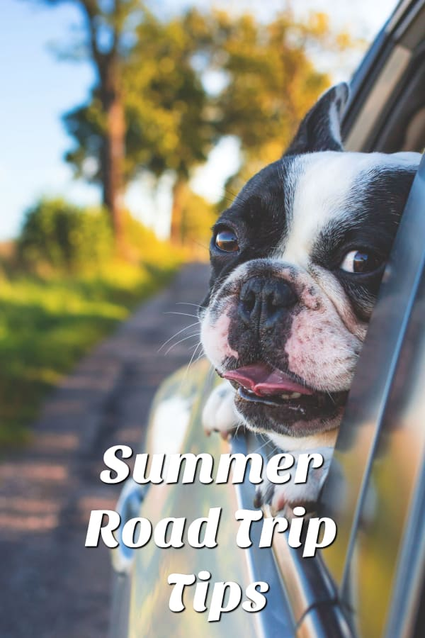Summer Road Trip Tips with Pets