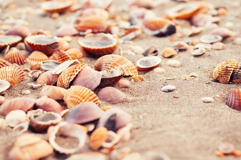 7 Games Your Family Can Play at the Beach seashells