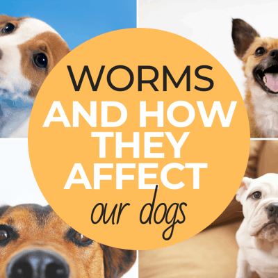 Worms and How They Affect Our Dogs
