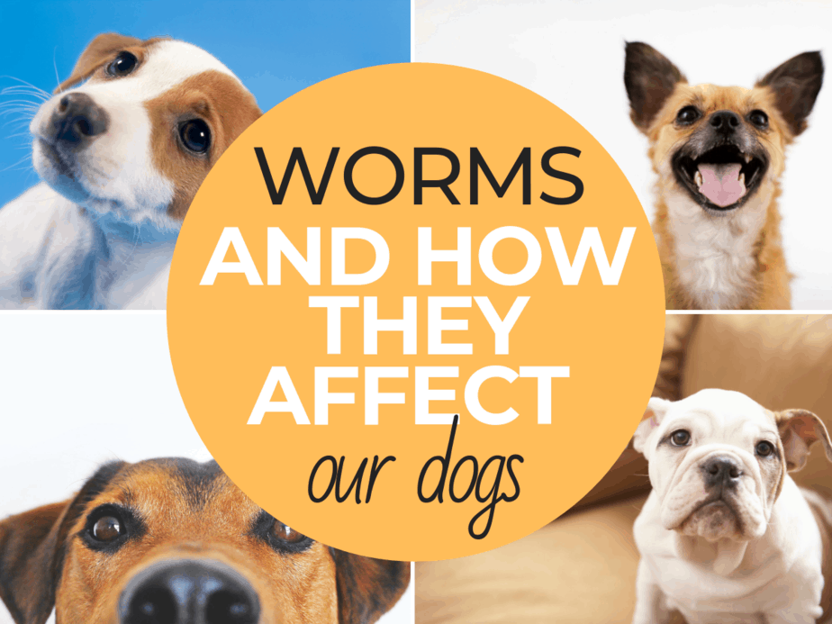 Worms and How They Affect Our Dogs from thismamaloves